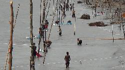 লক্ষ্মীপুরে মেঘনায় অবাধে চলছে গলদা চিংড়ি পোনা ধরার মহোৎসব