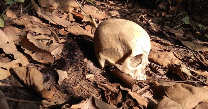 গ্রিসে  মিলল দু'লক্ষ বছরেরও বেশি পুরনো মানুষের মাথার খুলি