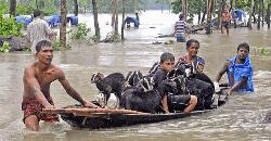 ভয়াবহ বন্যার কবলে নেপাল-ভারত