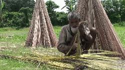 গোপালগঞ্জে চরম অনিশ্চয়তায় পাট চাষীরা