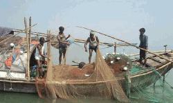 ইলিশ প্রজনন এলাকায় ২২ দিন মাছ ধরা নিষিদ্ধ