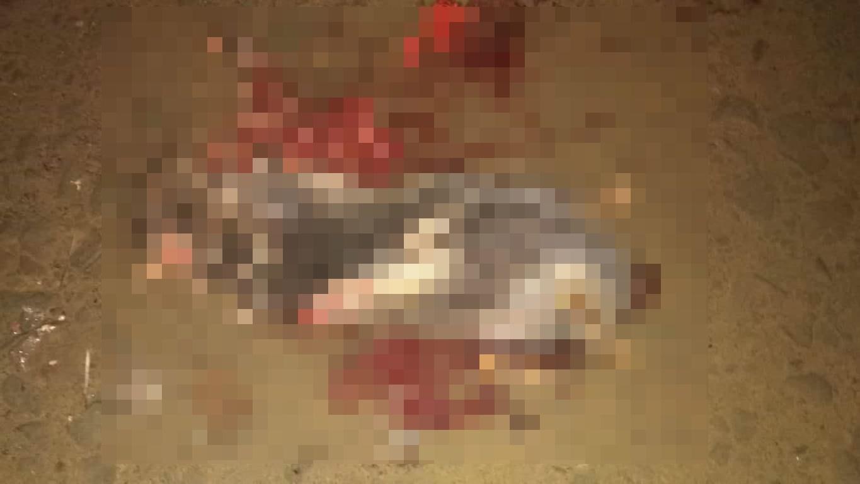 লাউয়াছড়ায় গাড়ি চাকায় পিষ্ট বিপন্ন 'সজারু'