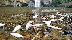 মাধবকুণ্ড জলপ্রপাতে ভাসছে মৃত মাছসহ বিভিন্ন জলজপ্রাণী