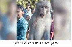 গুজবে নির্মমভাবে প্রাণ হারালো নিরীহ বানর