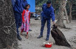 গাইবান্ধায় মিললো বিরল প্রজাতির 'কালা শকুন'