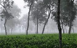 দেশের সর্বনিম্ন তাপমাত্রা শ্রীমঙ্গলে