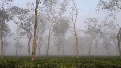শ্রীমঙ্গলে আজ দেশের সর্বনিম্ন তাপমাত্রা