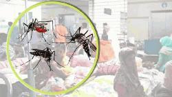 ডেঙ্গু নিয়ন্ত্রণে ডিএনসিসির চিরুনি অভিযান, ৫৭ হাজার টাকা জরিমানা