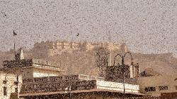 পঙ্গপাল মারতে ১ হাজার 'জলকামান' নিয়ে 'যুদ্ধপ্রস্তুতি' ভারতের