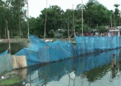 গাইবান্ধায় বন্যায় ভেসে গেছে সাড়ে ৪ কোটি টাকার মাছ