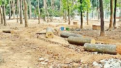 সোহরাওয়ার্দী উদ্যানে প্রায় ১ হাজার গাছ লাগানো হবে